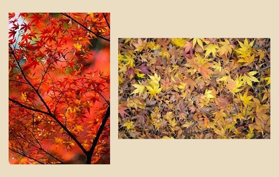 ぱくたそ-秋素材