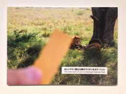 「ライオンシューズ」